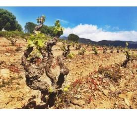 Vinyes d'Espelt a l'Empordà